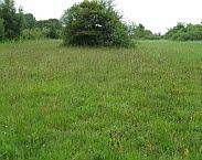 Blauwgrasland in de Veerslootslanden met Knoopkruid en Grote pimpernel. Cover foto Blauwgrasland in Overijssel: ontwikkelingen in de afgelopen kwart eeuw
