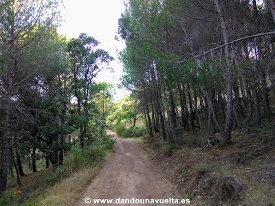 Pista forestal en Arroyomolinos de León, Huelva