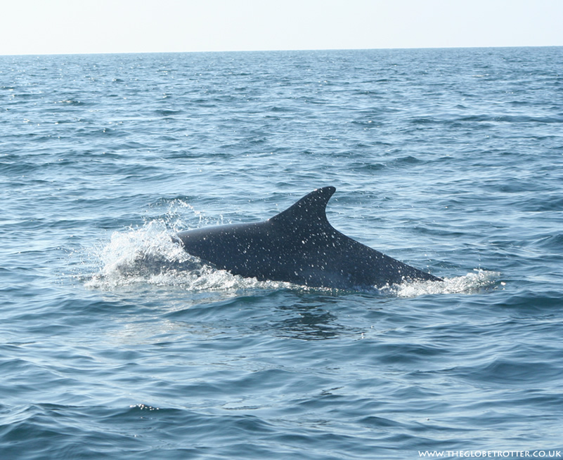 Les Ecrehous 3 Hour Dolphin, Seal and Reef Exploration RIB Trip with Island RIB Voyages
