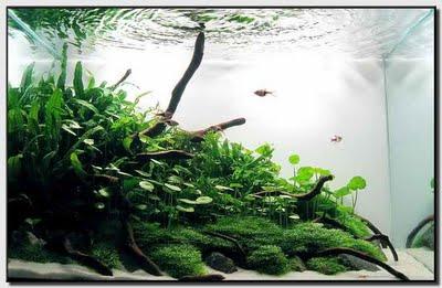 Creativedesign Aquascape S Composition