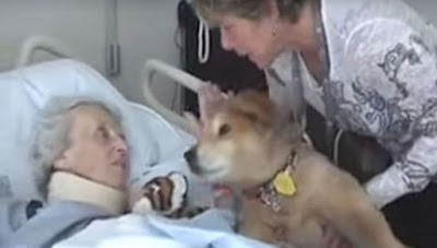 Dying Woman Holds Him Close In One Of The Most Special Moments Of This Therapy Dog's Life