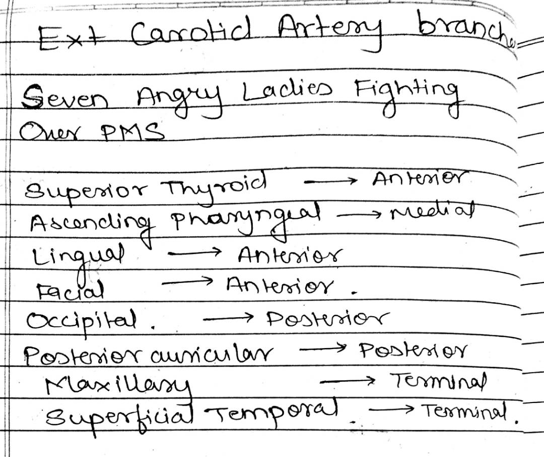 Medicowesome External Carotid Artery Branches Mnemonic