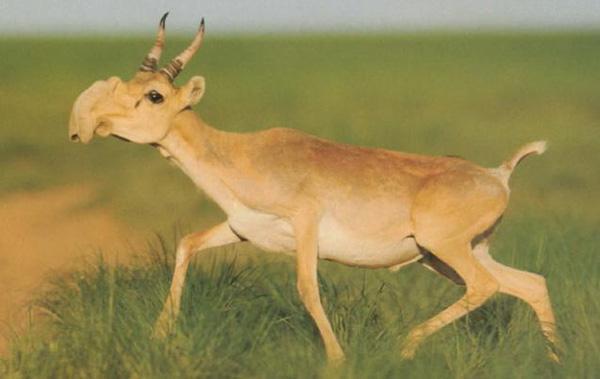 9 loài vật khiến bạn cam đoan là sản phẩm của... Photoshop