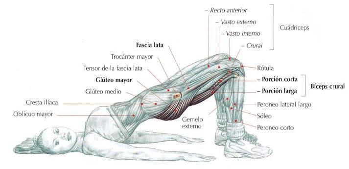 Elevación de la pelvis en el suelo, ejercicios para glúteos en casa | Rane Forti