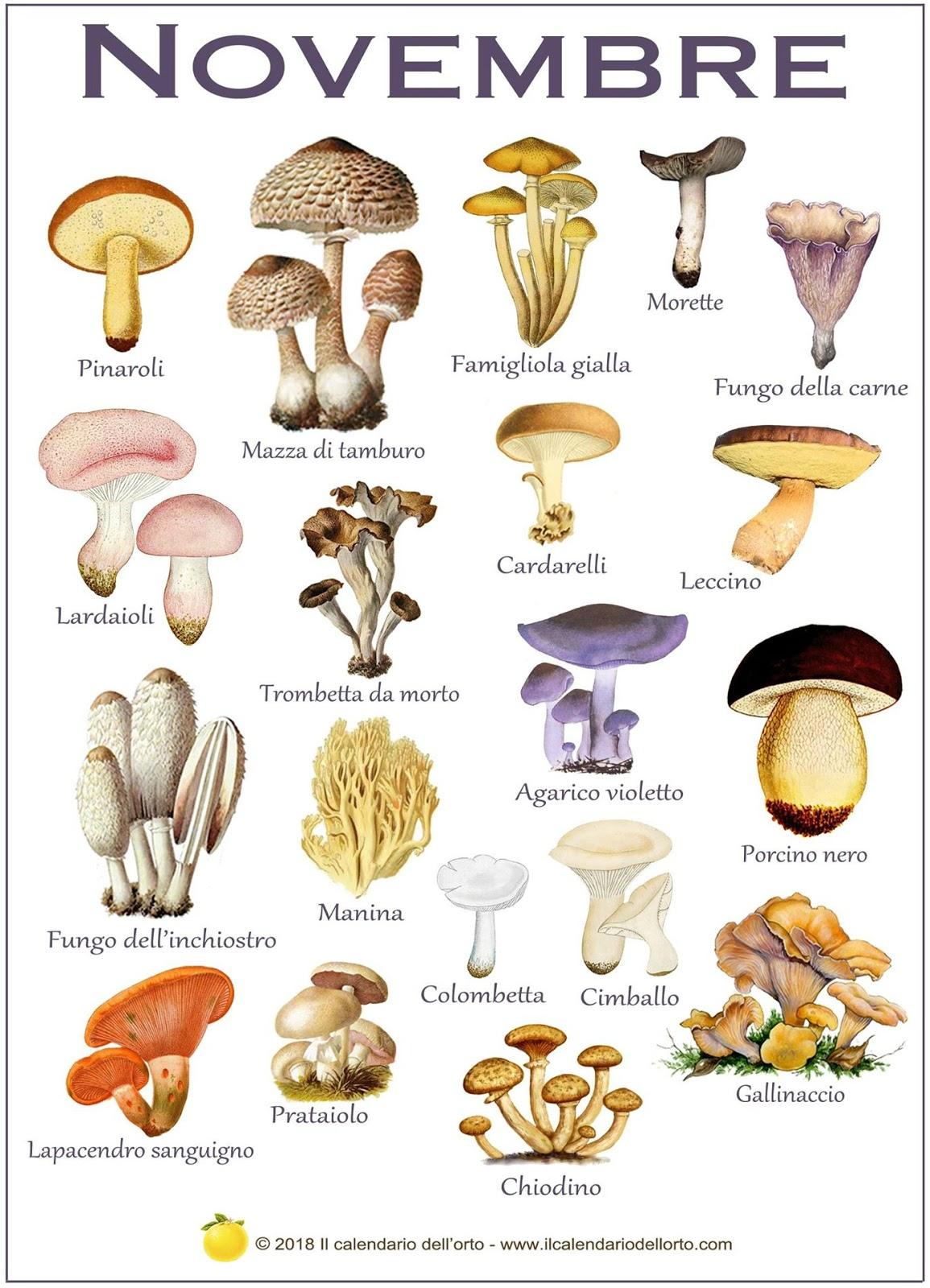 i funghi che si trovano a novembre