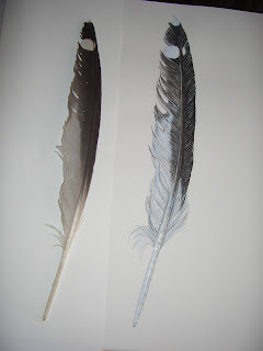 beautiful feather with spot