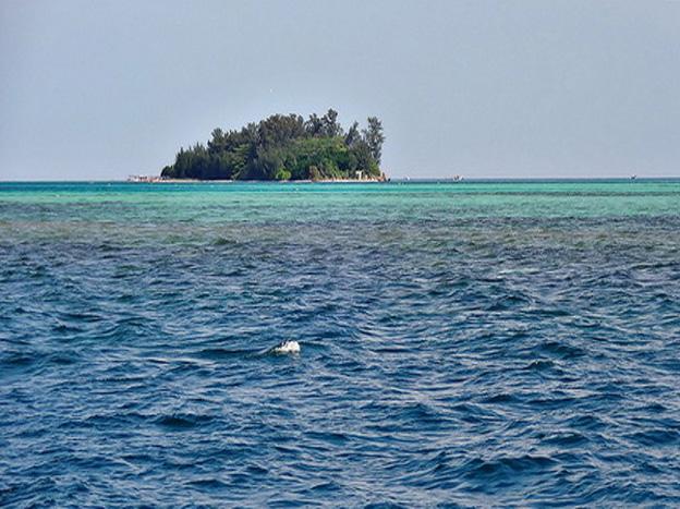 Pulau Tikus Bengkulu - Janoopedia