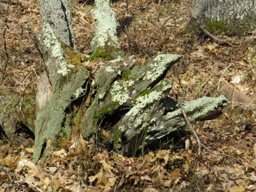 funny stump