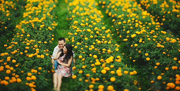 Berkunjung ke ladang bunga marigold Bali