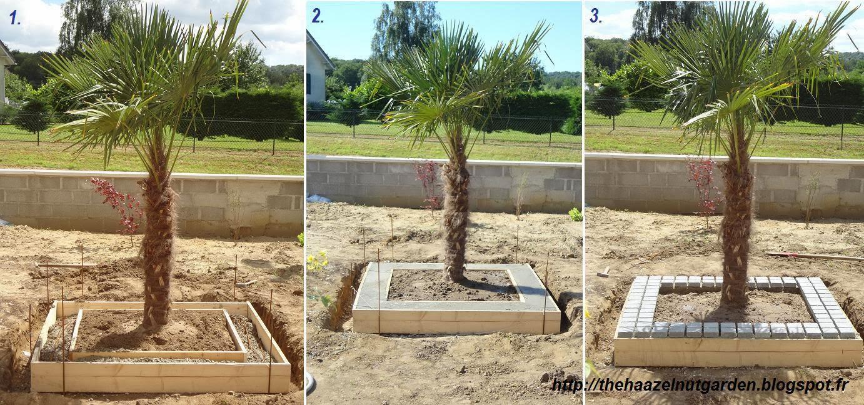 amenagement jardin avec palmier zj12 jornalagora. Black Bedroom Furniture Sets. Home Design Ideas