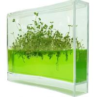 Un observatoire de plantes