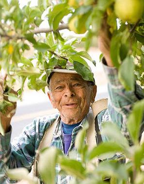 Greenery Pantone Colour of the Year 15-0343 Lemon Picker Happy Revitalised Healthy Living