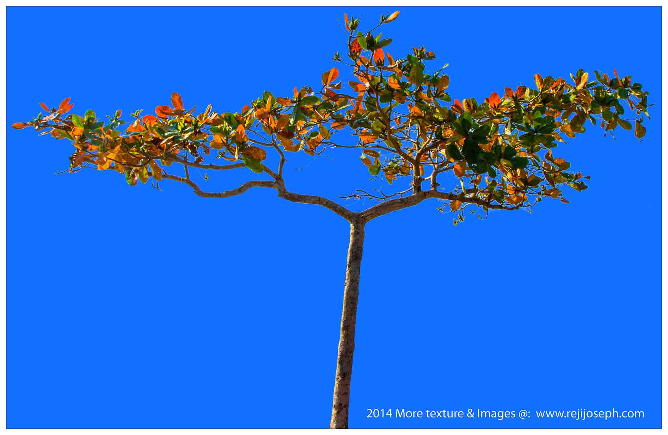 Tree 00002