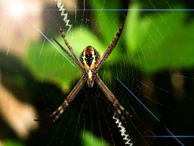 Trik cara mengatasi laba-laba bersarang dirumah