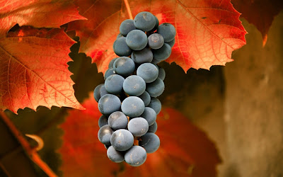 grapes black widescreen hd wallpaper