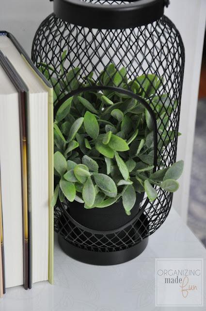 Plant inside IKEA lantern