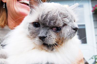 Guinness World Records Oldest Cat In The World