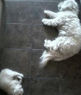 Buffy and Fluffy nap time - buffyandrenza.blogspot.com