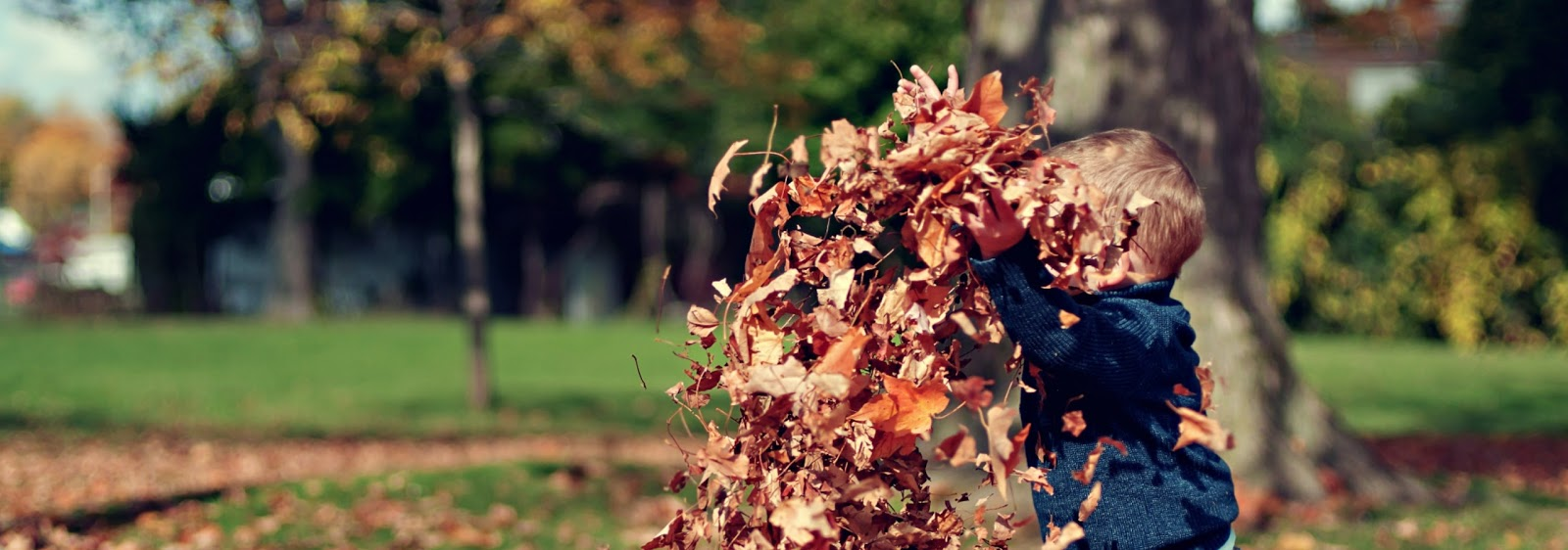 a young boy playing in a pile of dead leaves, the sun is shining and there are trees in the background.