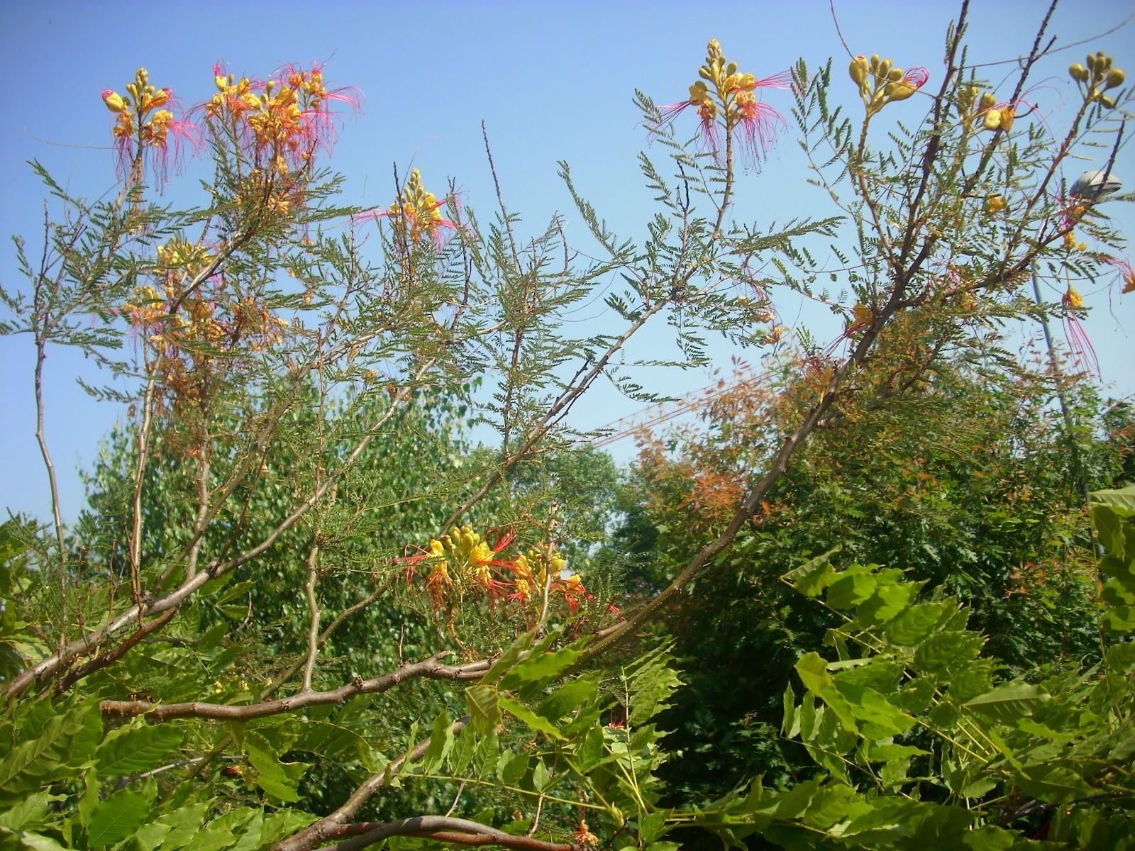 Arbusto A Fiori Gialli arbustum monsleonis: un bellissimo e singolare arbusto