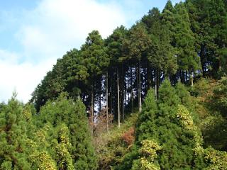 Avanza restauración de bosques afectados por plaga en Puebla