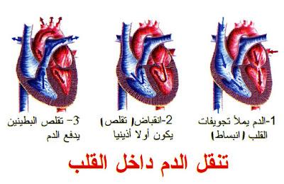 الدورة الدموية الصغرى و الكبرى