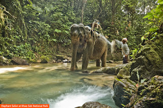 Cover Photo: Elephant Safari at Khao Sok National Park