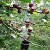 Arfak Siapkan 2.000 Hektare Lahan Perkebunan Kopi