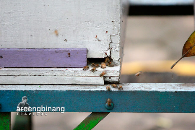 taman wisata lebah cibubur