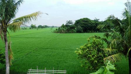 Sawah Desa Wonoketingal