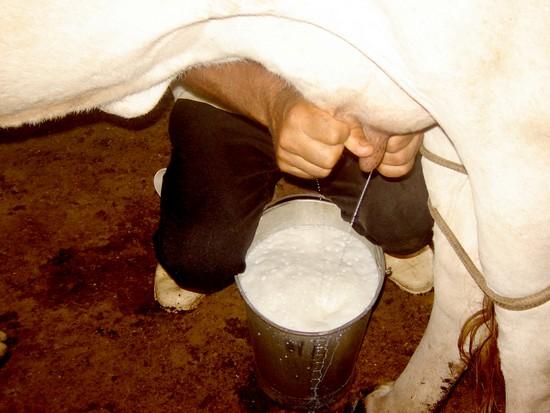 Πόσο γάλα κάνουν το χρόνο διάφορα ζώα