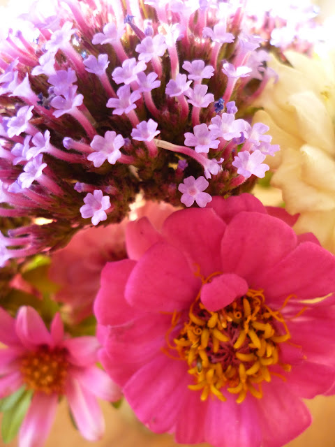 Perfect Cut flowers for a posy