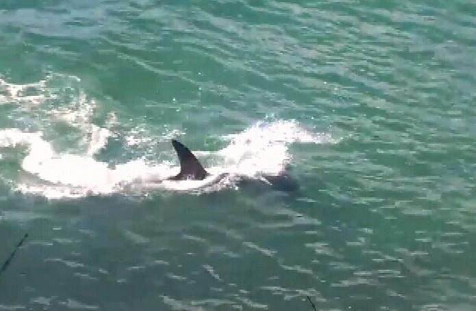 International Fishing News: VIDEO: incredible hammerhead ...