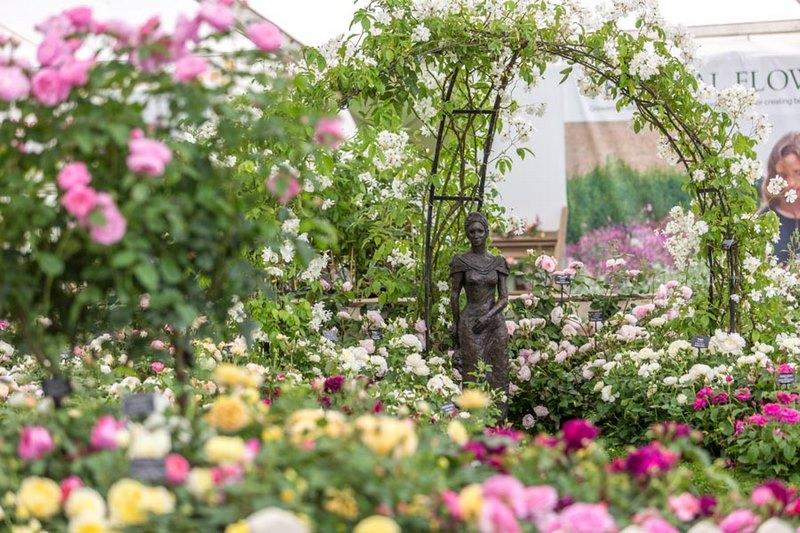 Jardín exhibición rosas inglesas David Austin. Hampton Court Flower Show 2017