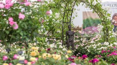 Jardín patio con Rosas Inglesas en Hampton Court Flower Show 2017