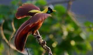Daftar Terbaru Burung Yang Dilindungi