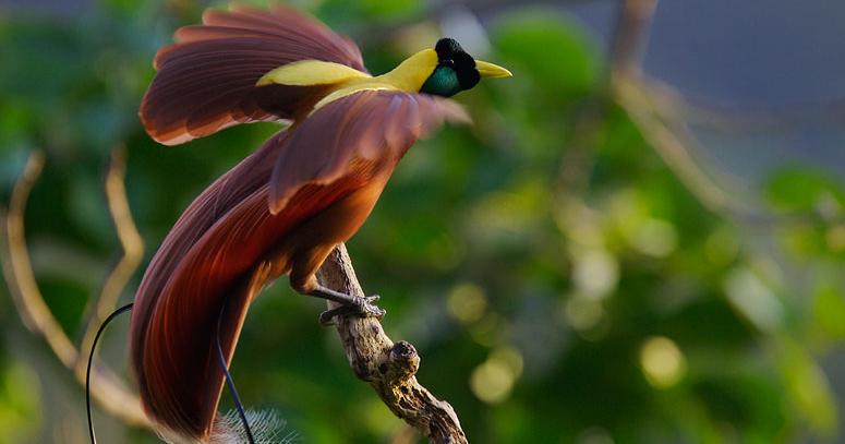 Daftar Terbaru Burung Yang Dilindungi Gatra Guru