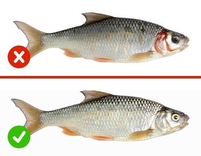 Cách phân biệt thực phẩm không bị nhiễm độc, thật giả, tươi hay ươn
