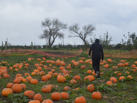 Seasonal | The Best Pumpkin Picking In The UK