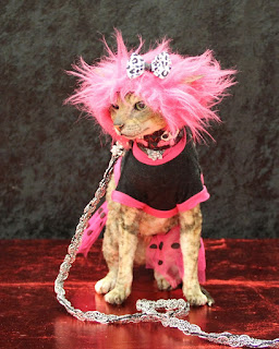 Coco the Couture Cat is a Rock Star!