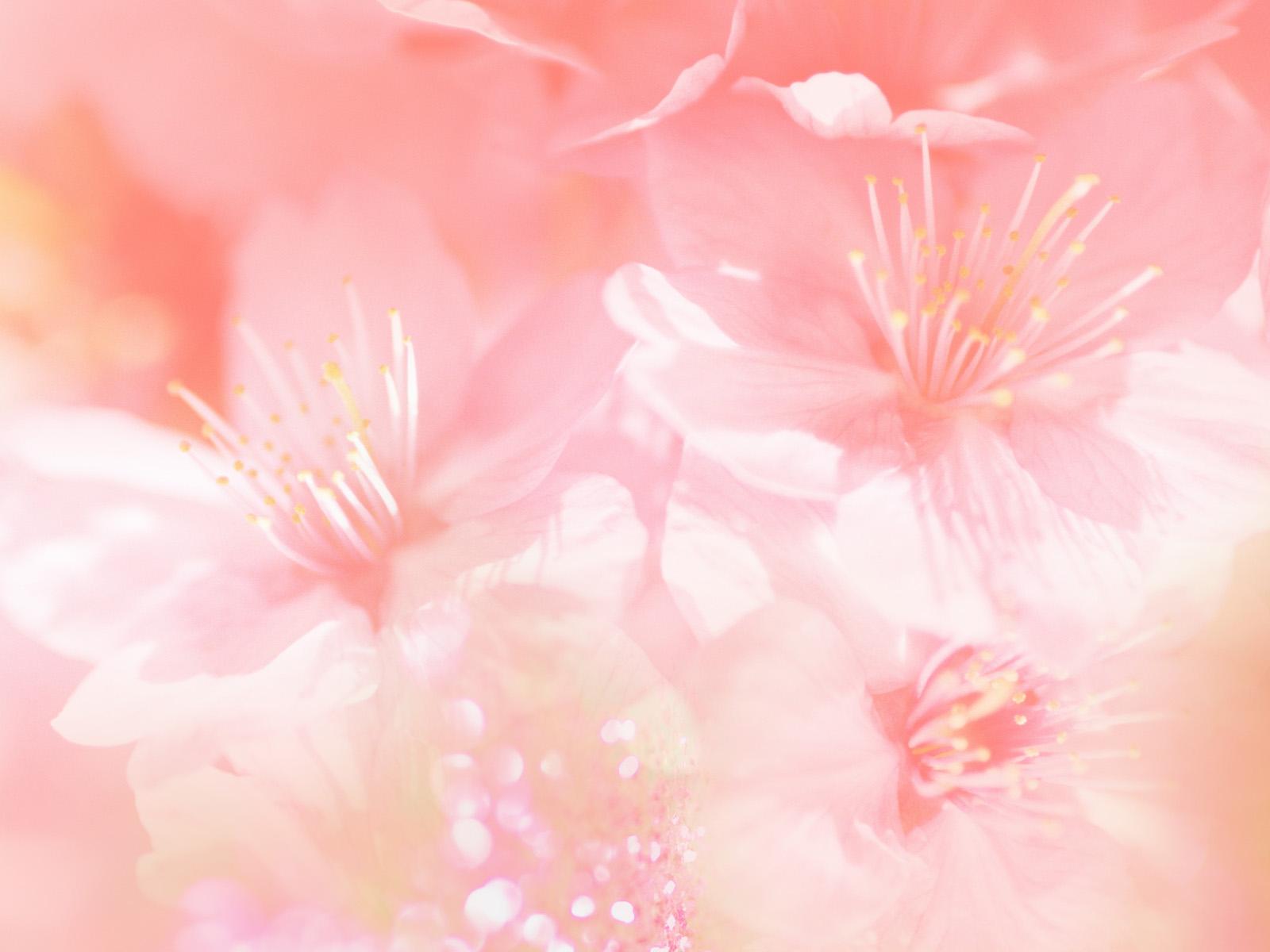 bloemen iphone achtergronden roze-#29