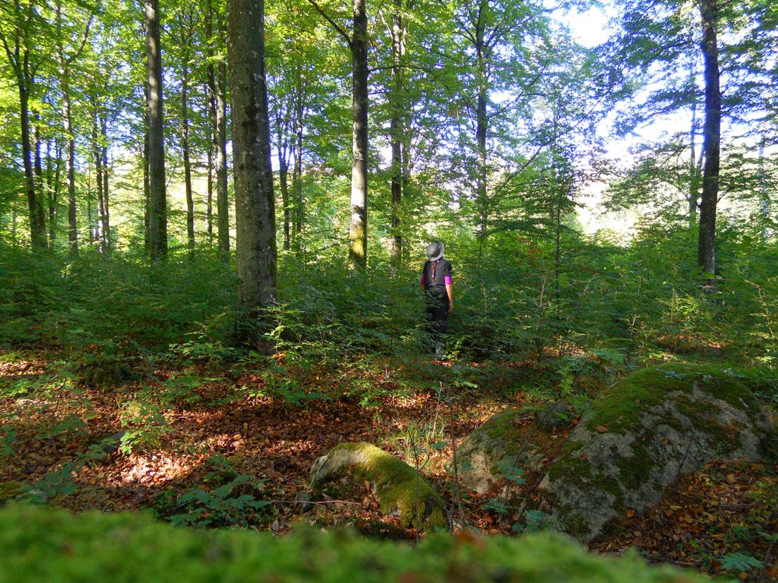 In un bosco di faggi