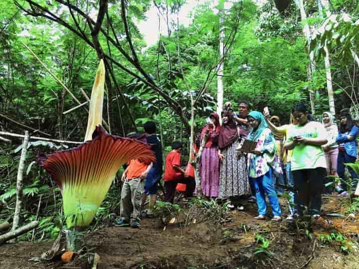 Wisata Alam Bengkulu Bumi Rafflesia
