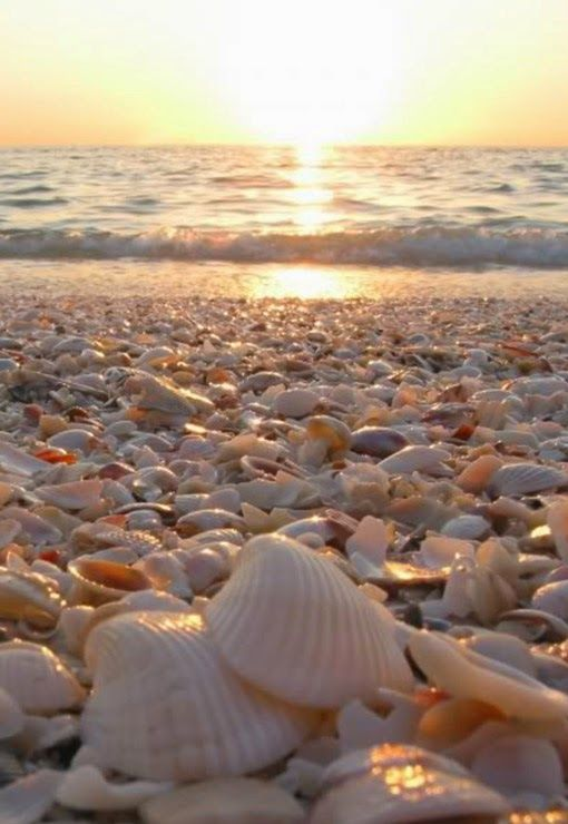 Sanibel Island, Florida, USA