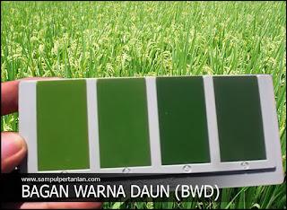 Cara menggunakan BWD (Bagan Warna Daun) atau LCC (Leaf Color Chart) dengan mudah dipahami