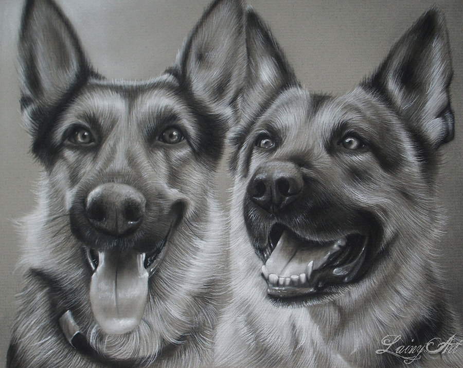 13-Zoe-and-Gunner-Alaina-Ferguson-Lainy-Animal-Charcoal-Portrait-Drawings-www-designstack-co