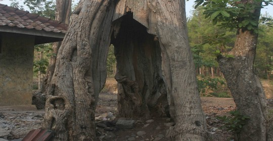 cerita misteri hutan donoloyo