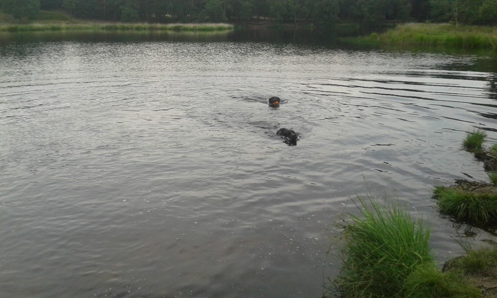Freaser en Wilka zwemmen samen in het ven, hun koppen steken boven water uit en Wilka houdt een speeltje vast