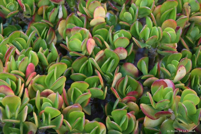 Plantas que sacan los colores al invierno