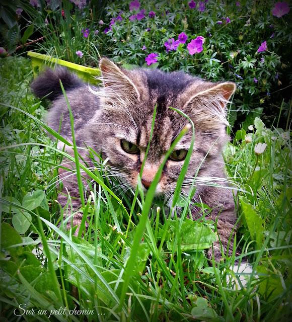 Le chat parmi les hautes herbes (Plume)